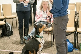 how do you become a guide dog trainer