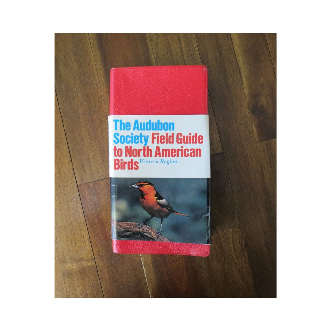 identification guide to north american birds
