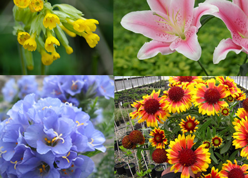 beginners guide to planting flowers