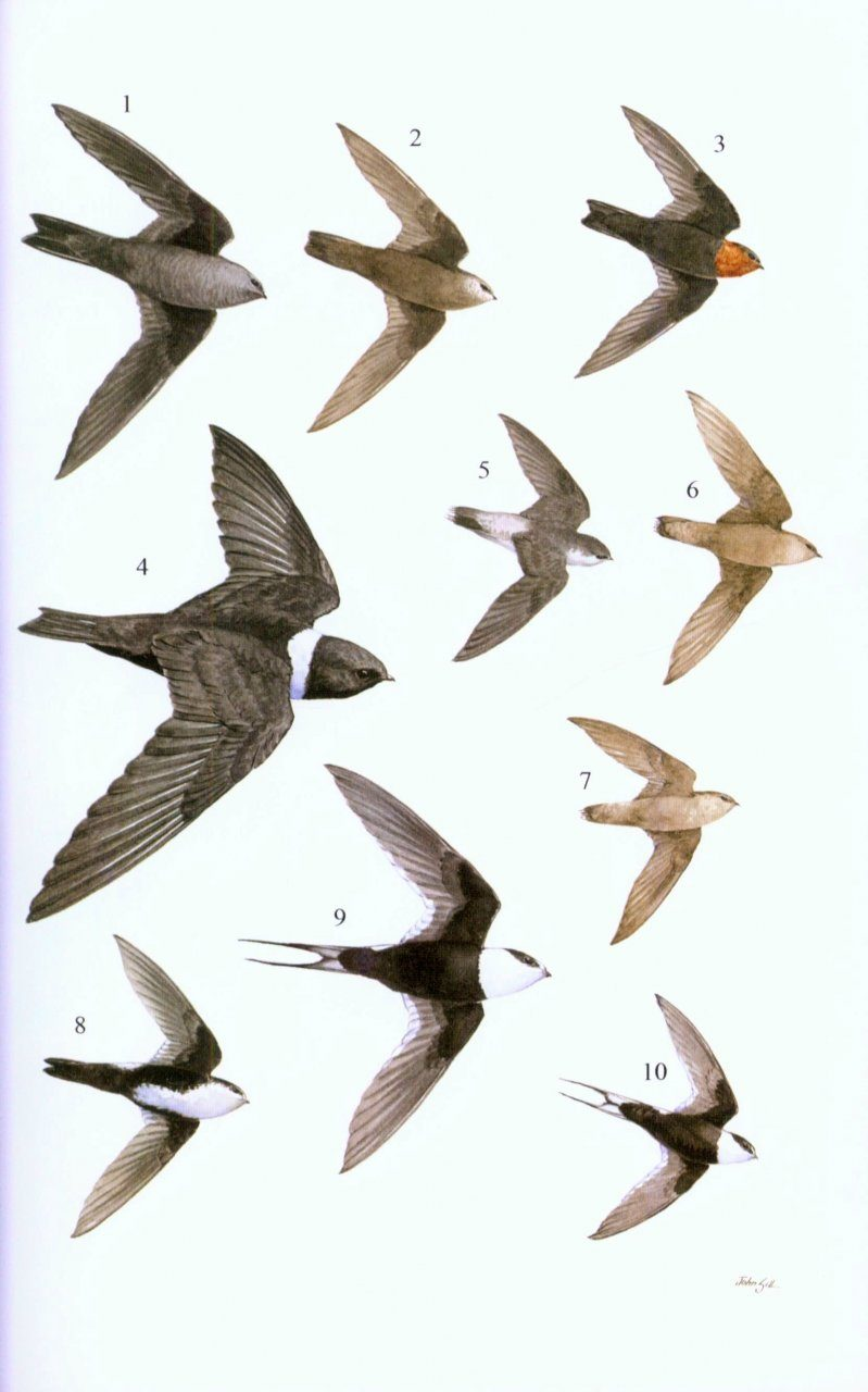 birds of vancouver island field guide