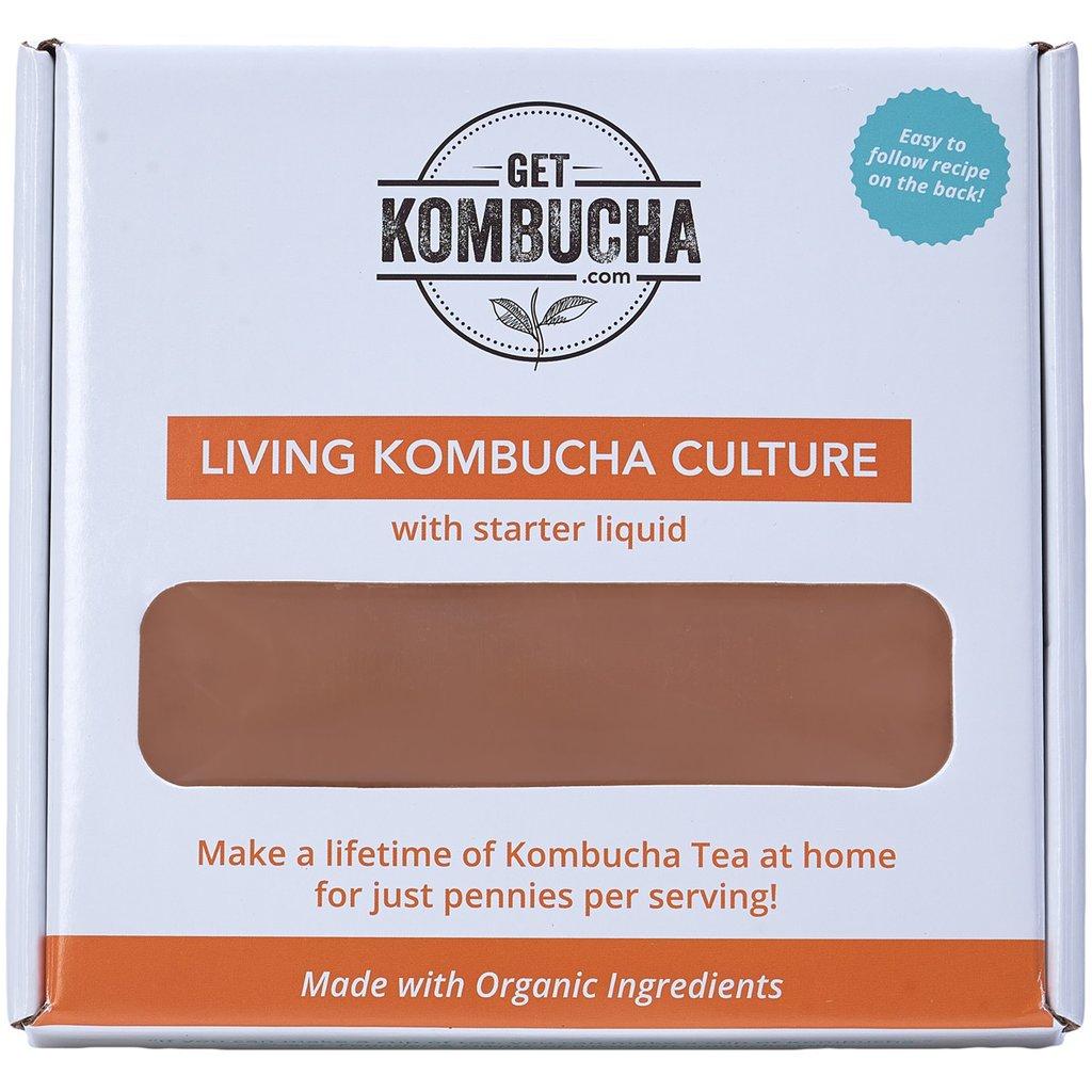 kombucha tea mushroom the essential guide