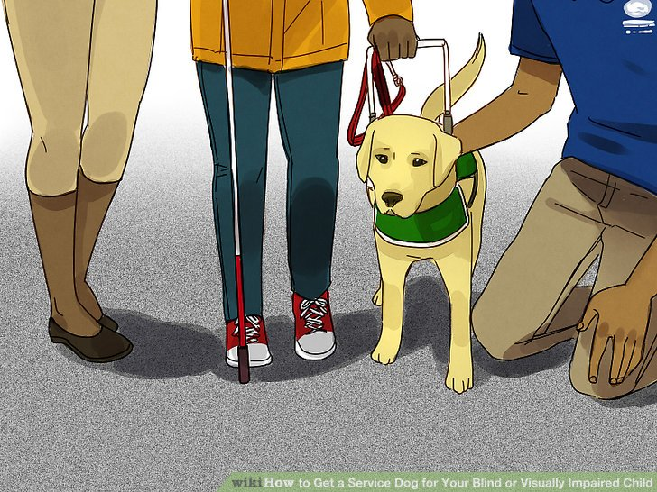 guide dogs for the blind rejects